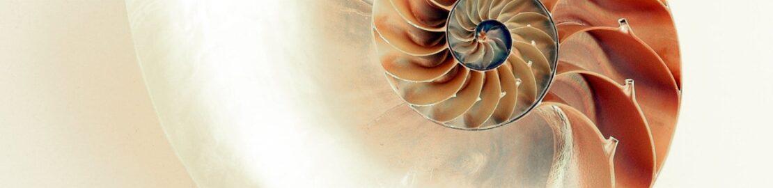 humn and shell