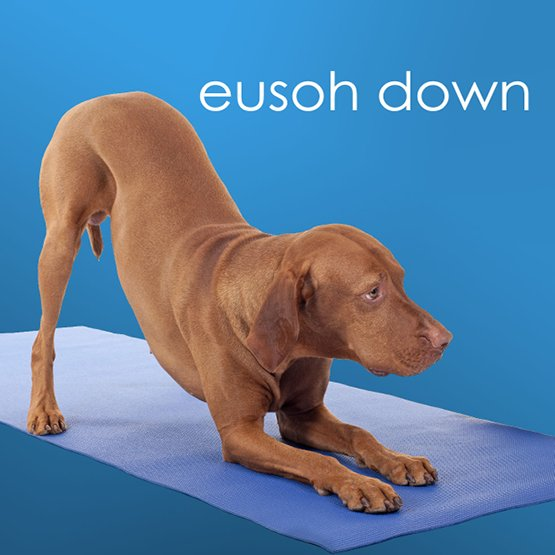 Eusoh founder